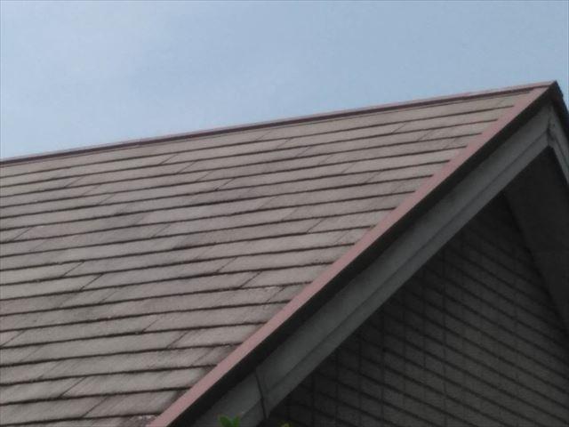 屋根にカビが発生してます