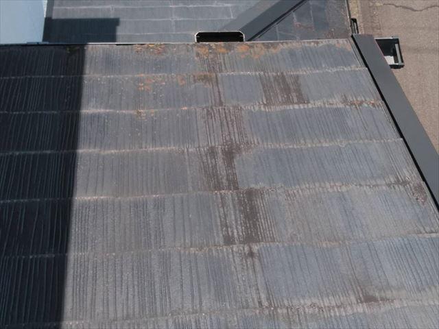 既存の屋根にカビ発生