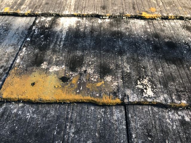 スレート屋根にカビが発生