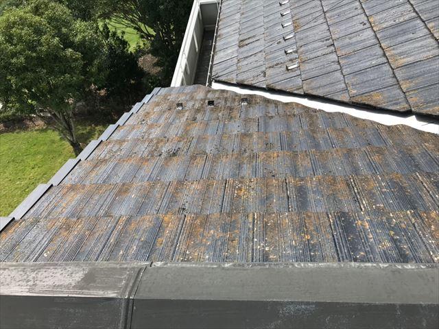 屋根全体にカビ、コケ発生