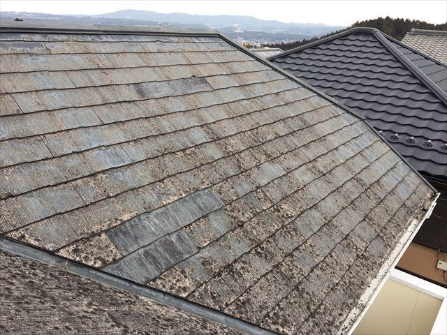 屋根全体にカビが発生している