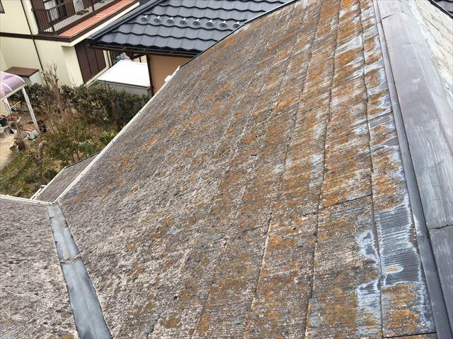 土岐市、屋根にカビ・コケ発生
