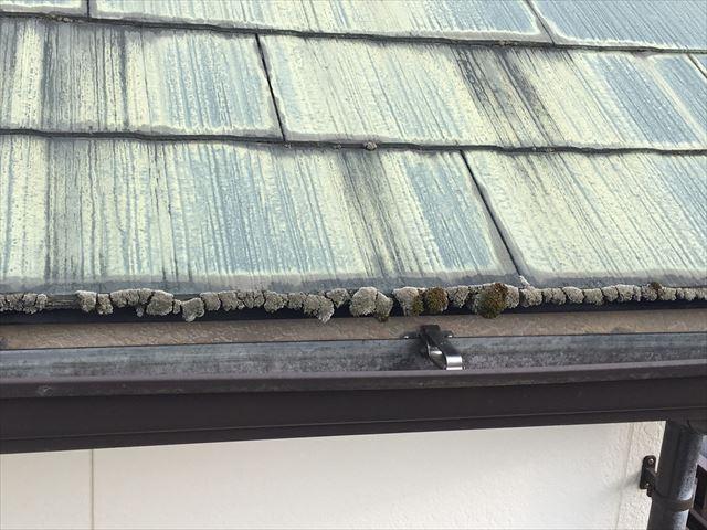 屋根材の先端にカビが発生