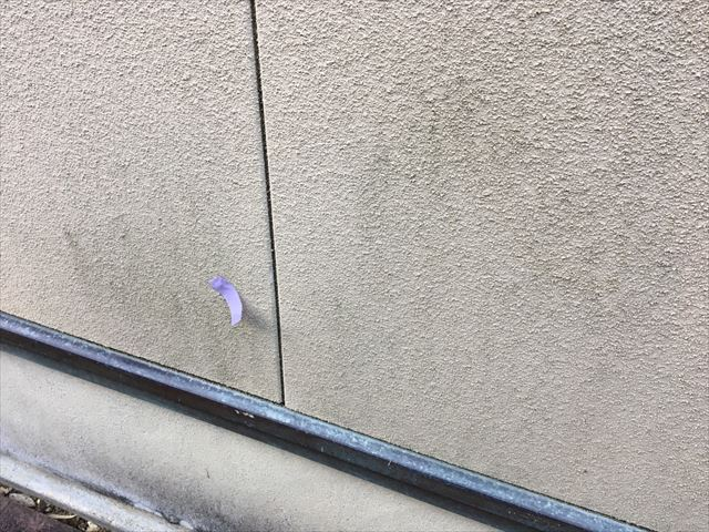 外壁にカビが発生しています