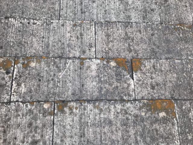 スレート屋根、カビの発生